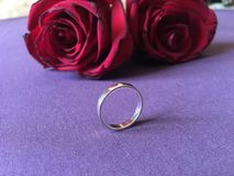 Two red roses with engagement ring on purple background stock image