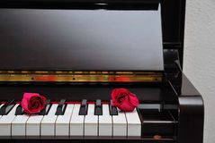 Two red roses on piano keyboard Royalty Free Stock Photography
