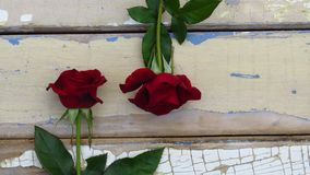 Two red roses on rustic style wood background. Old wood texture with peeling blue and white paint. stock photo