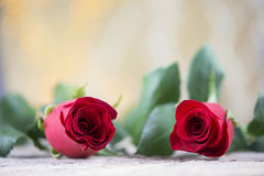 Two red roses for Valentine holiday Royalty Free Stock Photo