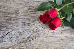 Two red roses for Valentine holiday Royalty Free Stock Images