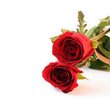 Two red roses on white background Royalty Free Stock Image