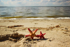 Two red starfish closeup on the yellow sand near the sea at the summertime Stock Photo