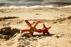 Two red starfish closeup on the yellow sand near the sea at the summertime Royalty Free Stock Photos