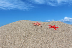 Two red starfishes on sand on a beach Royalty Free Stock Image