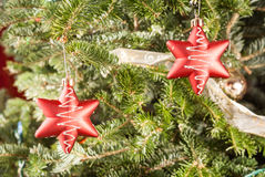 Two red stars on real Christmas tree Stock Image