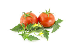 Two red tomatoes Stock Photo