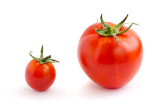 Two red tomatoes, small and big. Two different size tomatoes on a white background royalty free stock images