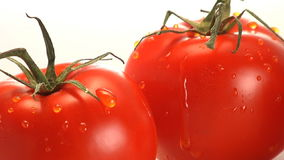 Two red tomatoes. Water trickles off two red tomatoes stock footage