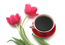 Two red tulips and cup from coffee on a white back. Ground Stock Photo