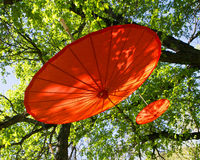 Two red umbrellas in tree Royalty Free Stock Photography