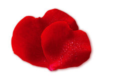 Two Red Valentin `s Day heart. Stock Images