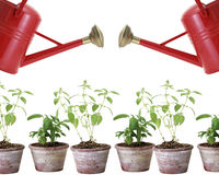 Two red watering cans and plants in pots Royalty Free Stock Photography
