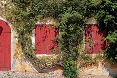 Two red windows and a door surrounded by a creeper Royalty Free Stock Photo