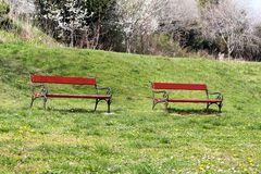 Two red wooden bench in beautiful natural environment, grass and spring flowers / Benches in public park at spring sunny day. Stock Photos