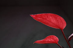 Two red zen leaves in team stock images