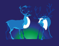 Two reindeers Stock Images