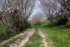 Two retreating male figures on a path among flowering trees in the Golan Heights in spring in Israel. A path among flowering trees in the Golan Heights in spring stock images