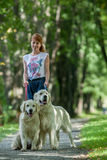 Two retriever in the park Royalty Free Stock Photos