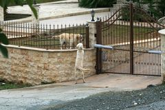Two dogs beside a gate stock photos