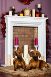 Two Rhodesian Ridgeback puppies in front of stylized  fireplace. Two Rhodesian Ridgeback puppies lying on a furry carpet in front of stylized candle fireplace Stock Photo