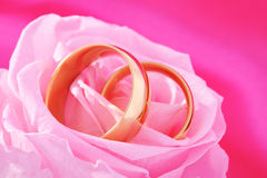 Two rings with rose Royalty Free Stock Photos