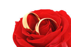 Two rings with rose Stock Photos