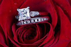 Two rings in rose petals Royalty Free Stock Images