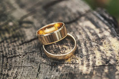 Two rings on a tree stump Royalty Free Stock Image
