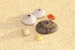 Two rings, wedding on the beach. Two wedding rings on a pebble with seashells and sea urchin shells on the sand Stock Images