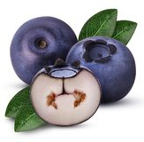 Two Ripe blueberry one cut in half with leaf royalty free stock photography