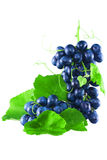 Two ripe bunches of grapes with leaves. And a mustache, isolated on a white background Royalty Free Stock Photo