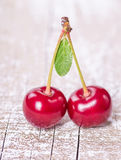 Two ripe cherries Royalty Free Stock Photo