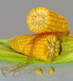 Two ripe corn Stock Image