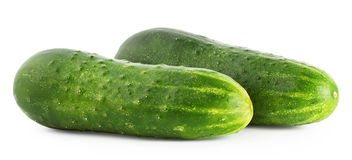 Two ripe cucumber Stock Images