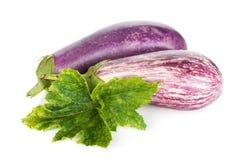 Two ripe eggplants Stock Photos