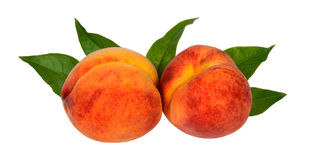 Two ripe juicy peach with green leaves Royalty Free Stock Photography