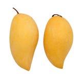 Two ripe mangoes Stock Photos