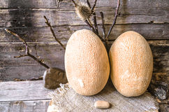 Two ripe melon  with thorn  and stones Royalty Free Stock Image