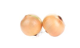 Two ripe onions. Stock Images