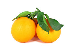 Two ripe oranges Royalty Free Stock Photography