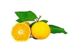 Two ripe oranges Royalty Free Stock Photos