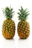 Two ripe pineapples Royalty Free Stock Image