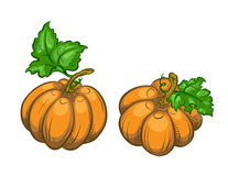 Two ripe pumpkins. Stock Photo