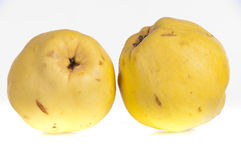 Two ripe quinces. Two ripe yellow quinces, often used to make jam, jelly or puddings, on a white background Stock Photography