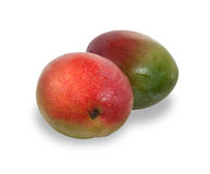 Two ripe red and green mango fruit isolated on white with shadow Stock Photography