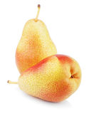 Two ripe red yellow pear fruits Royalty Free Stock Image