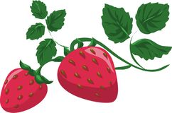 Strawberry branch with leaves, summer red berry vector illustration