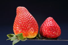 Two ripe strawberries Stock Photo