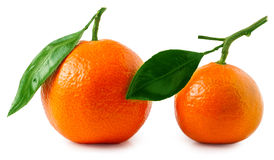 Two ripe tangerines isolated on white background Stock Photography